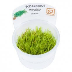 Tropica Vesicularia ferriei Weeping mousse in vitro pour aquarium