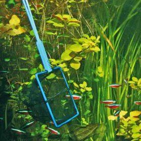 JBL épuisette premium à maille fine pour attraper des poissons d'aquarium