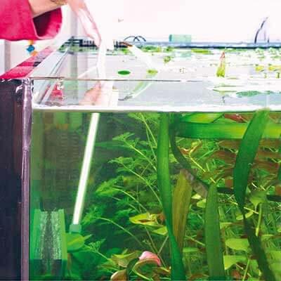 JBL Blanki Set nettoyeur de vitres manche long pour aquarium