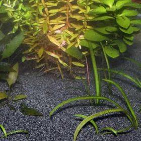 Substrat de sol neutre pour aquarium JBL Sansibar Black