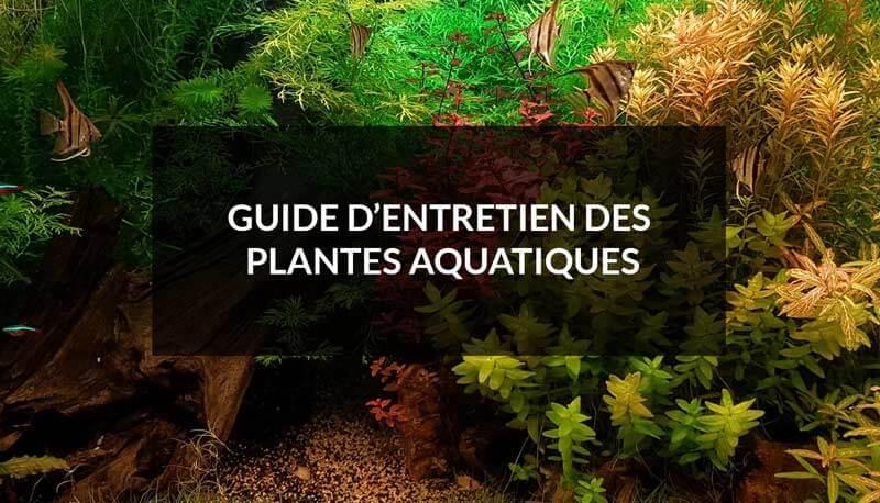 guide d'entretien pour bien entretenir les plantes d'aquarium