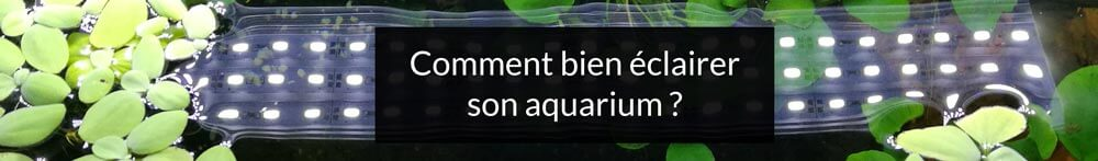 comment bien éclairer son aquarium ? Tout savoir