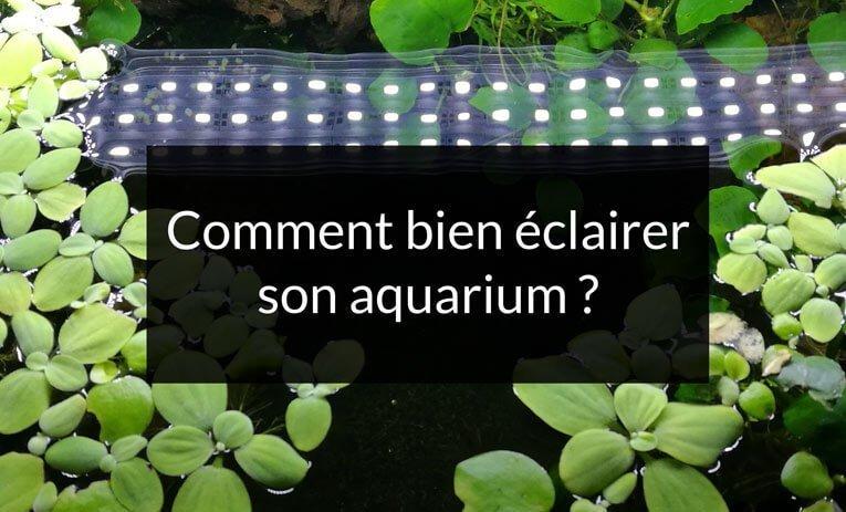 comment bien éclairer son aquarium? Les réponses