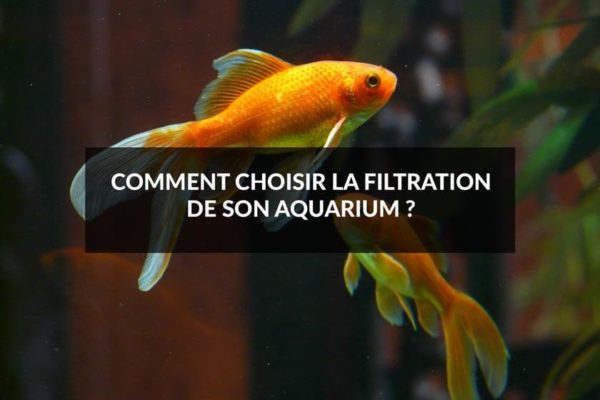 Comment choisir la filtration de son aquarium