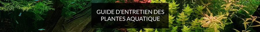 guide d'entretien des plantes aquatiques pour aquarium