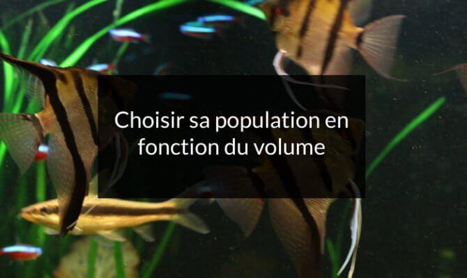 le choix de la population en fonction du volume de l'aquarium