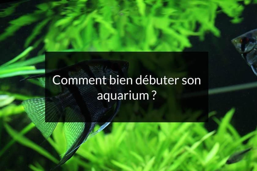 comment bien débuter un nouvel aquarium