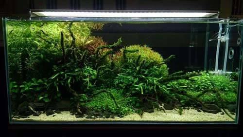 Chihiros A Plus démonstration rampe led éclairage pour aquarium