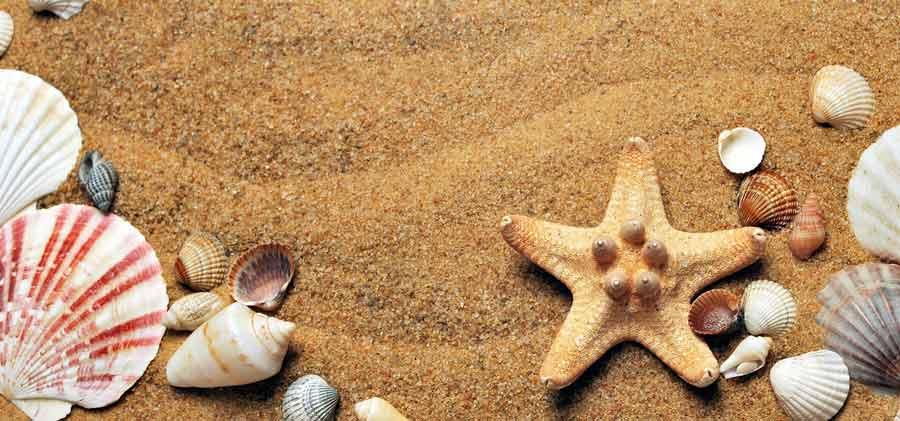 entretenir un aquarium pendant les vacances d'été