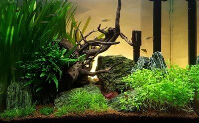Aquarium Australo-Guinéen 90 litres