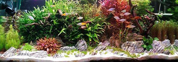 Aquarium Australo-Guinéen 300 litres