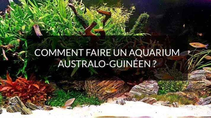 Comment faire un aquarium australo-guinéen