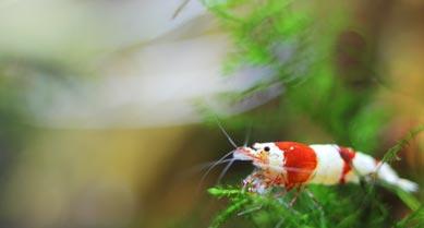 nano aquarium pour crevettes