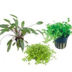 lot mix de trois plantes aquatiques