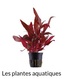 les plantes aquatiques