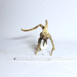 racine mini root 10