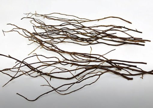 branches de racines aquascaping