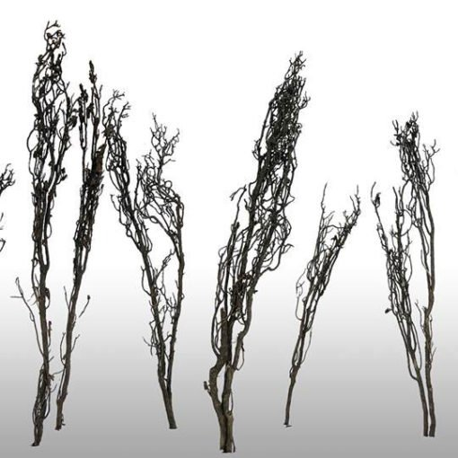 faraway trees racine arbre aquascaping