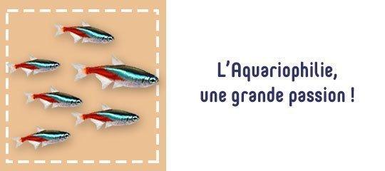 l'aquariophilie, une grande passion