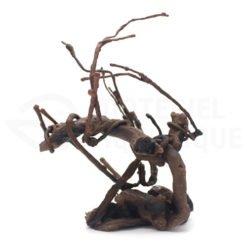 arbre de racine